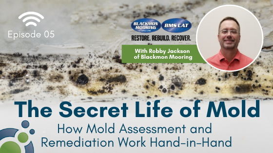 How Mold Assessment and Remediation Work Hand-in-Hand
